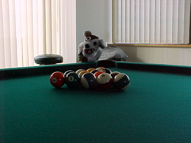 Cuz Dogs Can Play Pool; Actual size=240 pixels wide