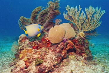 Ames scuba diving off of Cozumel